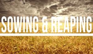 reaping_blog